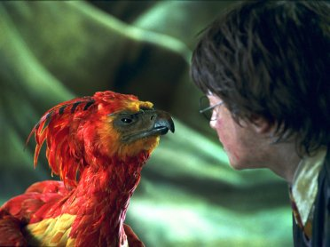 Fawkes_WB_F2_FawkesMeetingHarryPotter_Still_100615_Land